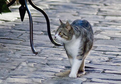 イタリアの猫の日