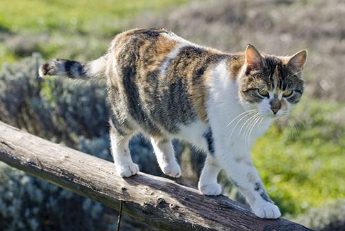 オルチャ渓谷の猫