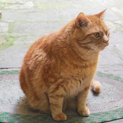 モンテプルチャーノの猫