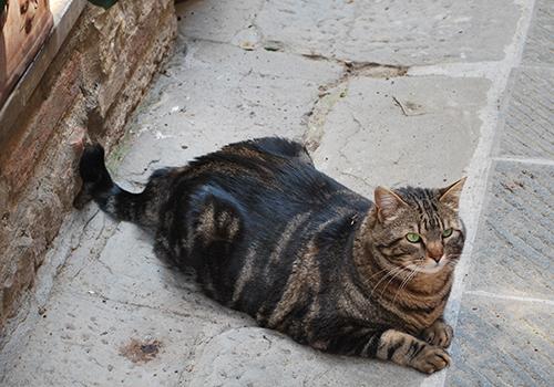 ソラーノの猫