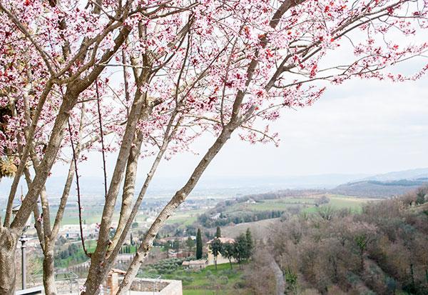 アンギアーリ春の花