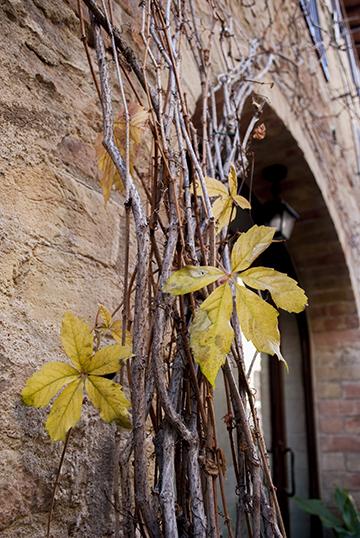 サンジミニャーノの黄葉と枯葉