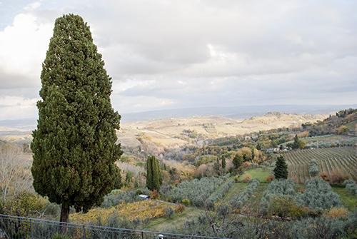 サンジミニャーノとトスカーナの糸杉