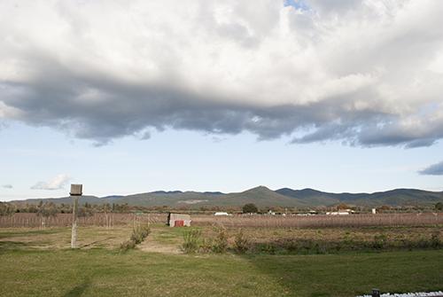 サパイオの畑