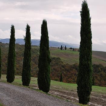 オルチャ渓谷と糸杉