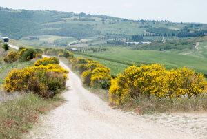 オルチャ渓谷のエニシダの道