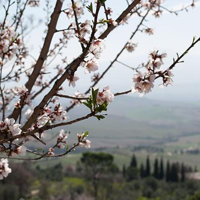オルチャ渓谷の春