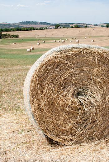 オルチャ渓谷の干し草ロール