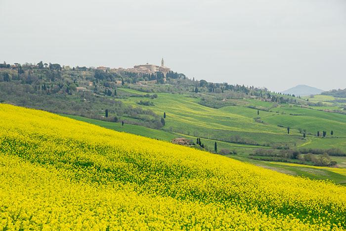 黄色の花とピエンツァ