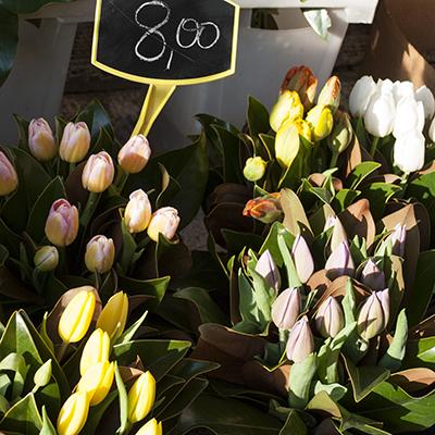 サンジミニャーノの花屋チューリップ