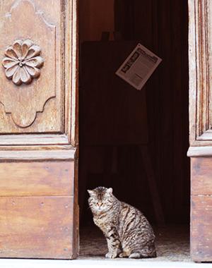 ソラーノの教会の入り口に座る猫