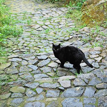 ソラーノの黒猫