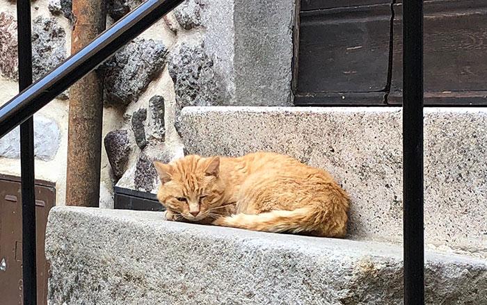サンサルヴァトーレ猫