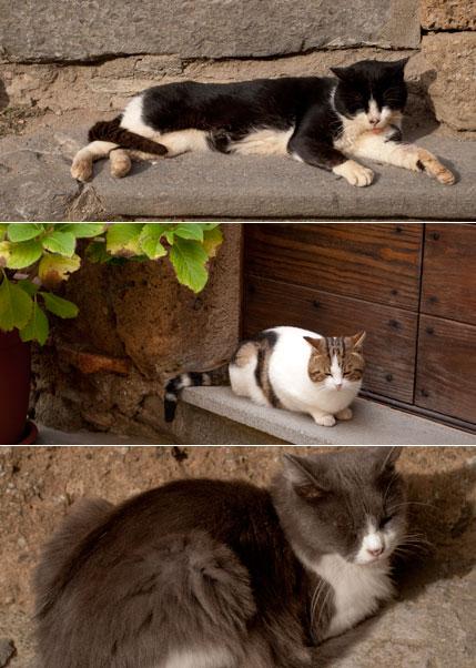 チヴィタバーニョレージョ猫