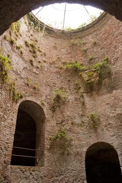 聖パトリッツォの井戸草