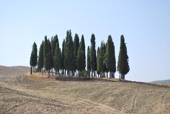 トスカーナの糸杉