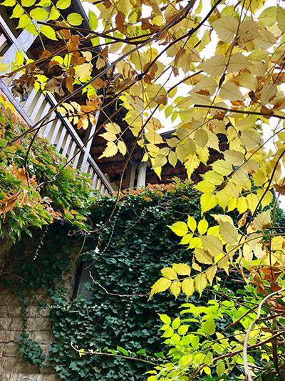 モンテフィオラッレの黄葉