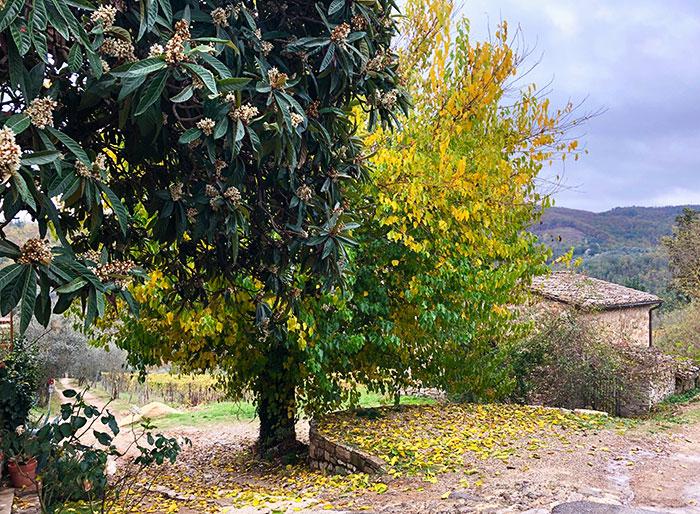 秋のキアンティクラシコ