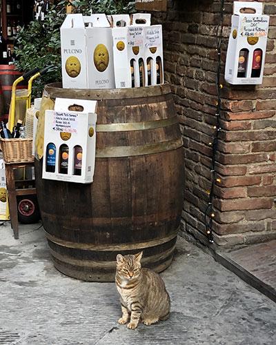 モンテプルチャーノ猫