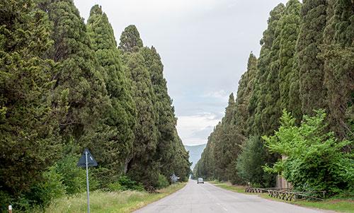 ボルゲリ村の糸杉