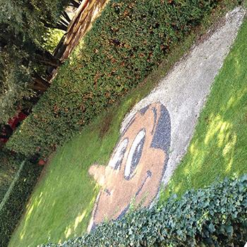 ピノッキオ芝生