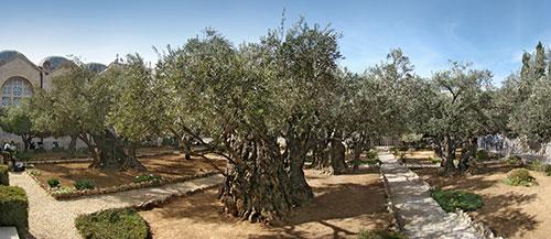ゲッセマネの祈りのオリーブ園