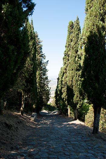 中心への道