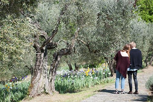 アイリス庭園オリーブ