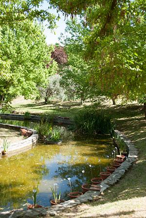アイリス庭園池