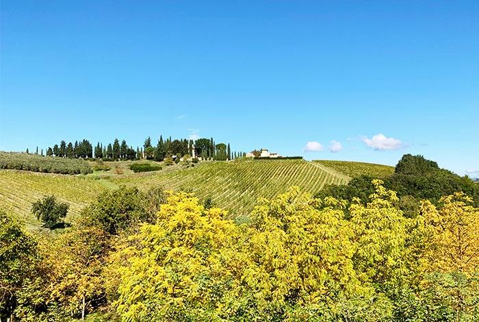 キャンティクラシコ葡萄畑