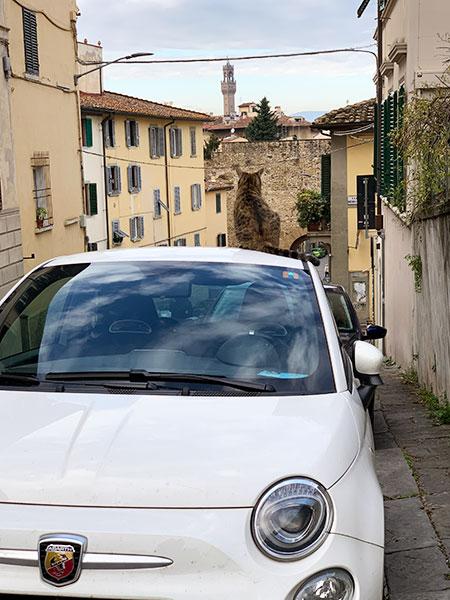 車とヴェッキオ宮殿