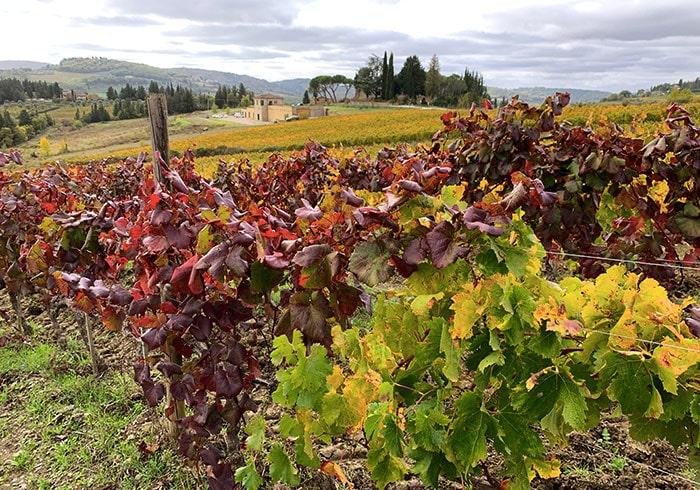 秋の葡萄畑
