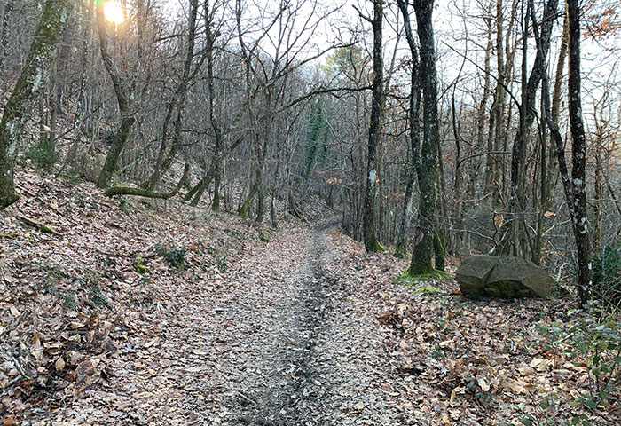 森の中の道