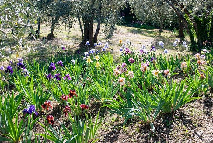 フィレンツェの庭園情報